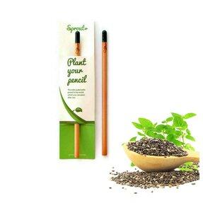 Pflanzen Sie den Bleistift ein - Chia