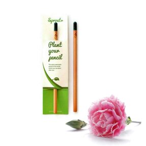Pflanzen Sie den Bleistift ein - Nelke