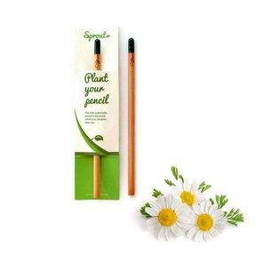 Pflanzen Sie den Bleistift ein - Gänseblümchen