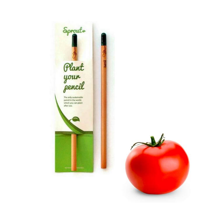 Pflanzen Sie den Bleistift ein - Tomate