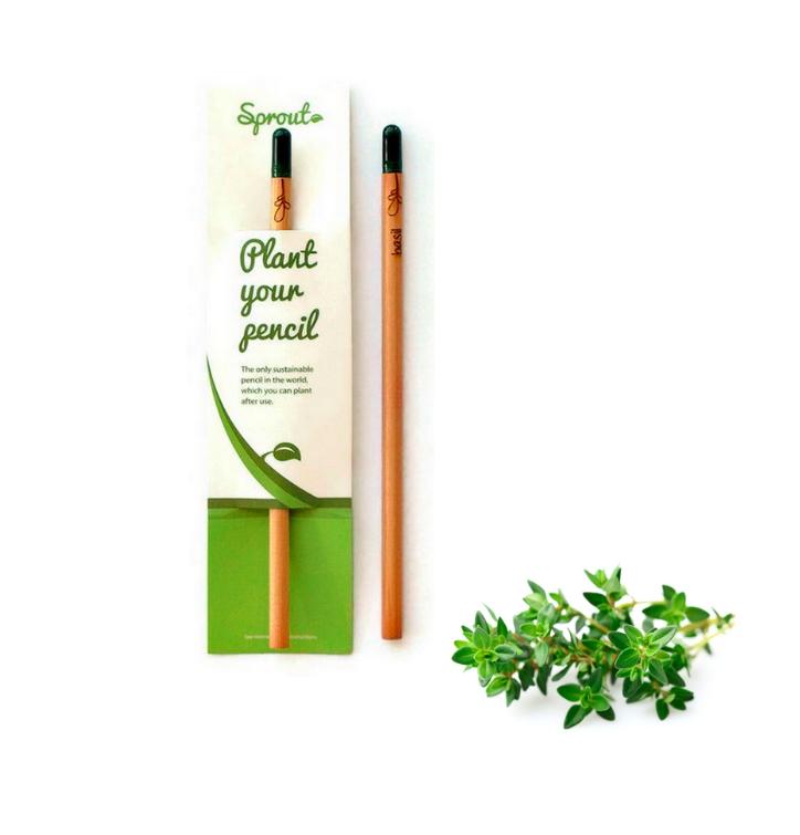 Pflanzen Sie den Bleistift ein - Thymian