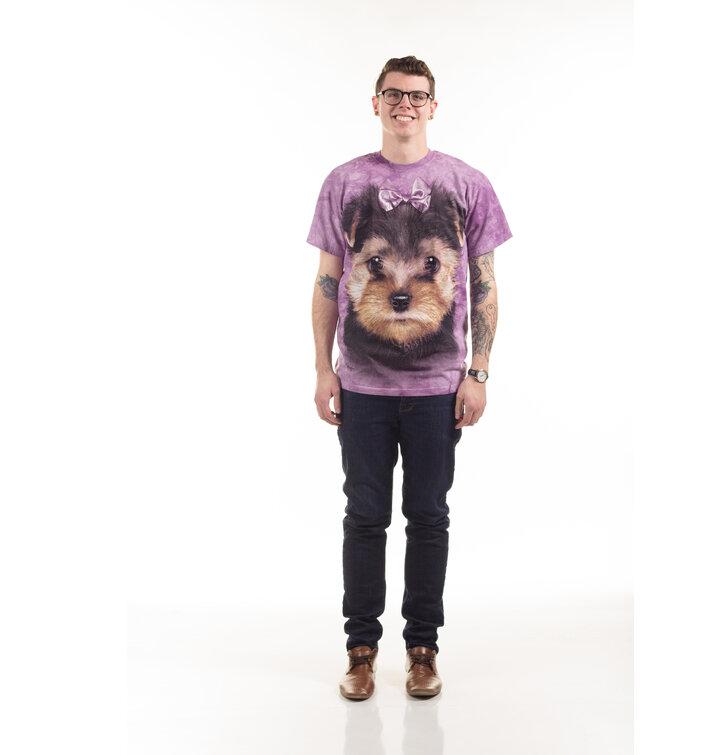 Kolyok Yorkshire Terrier Polo Dedoles