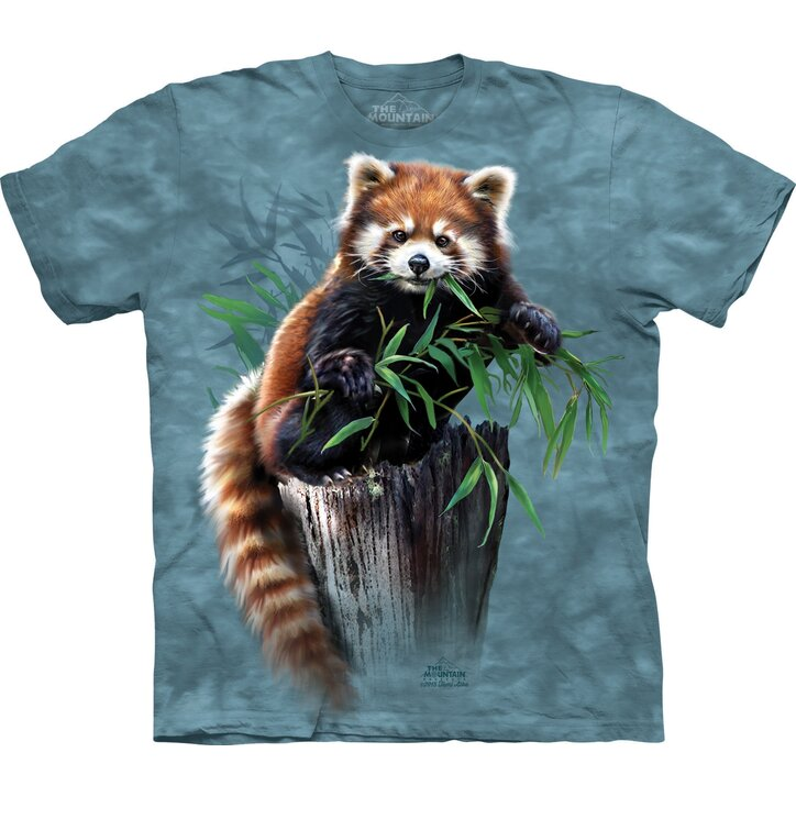 Red Panda with Bamboo