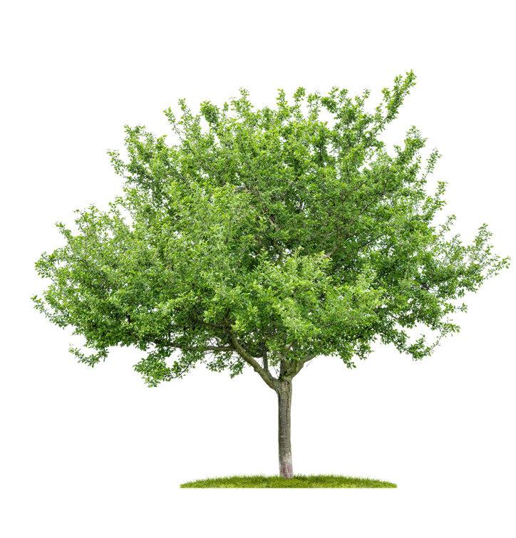 Zasadit 1 strom