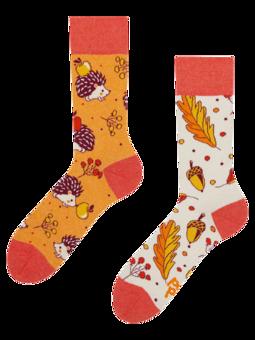 Lustige Socken aus recycelter Baumwolle Herbstigel