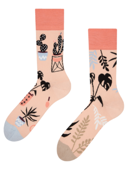 Regular Socks Indoor Plants