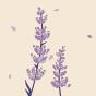 Wesołe rajstopy Kwiat lawendy