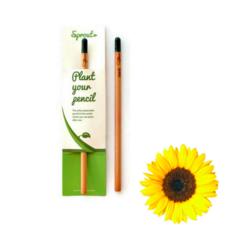 Pflanzen Sie den Bleistift ein - Sonnenblume