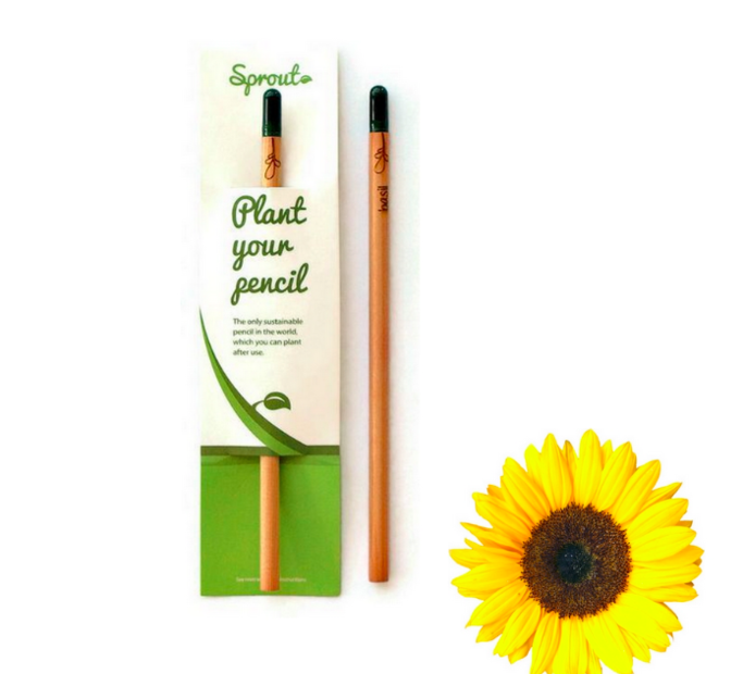Zasaď ceruzku - slnečnica