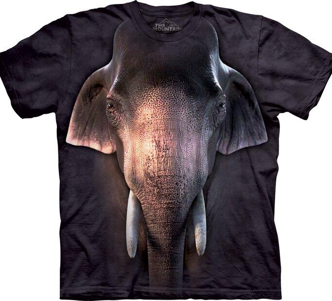 Big Face Asian Elephant