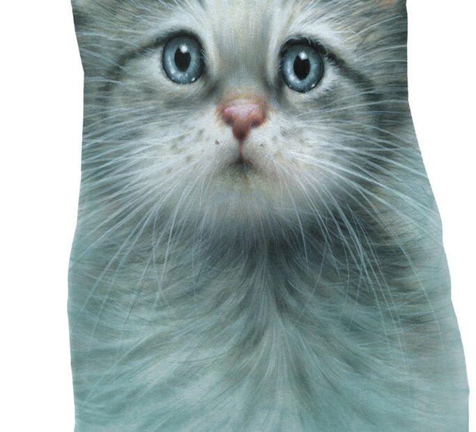 Blue Eyed Kitten  Adult