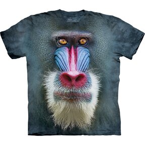 Mandrill Baboon Child
