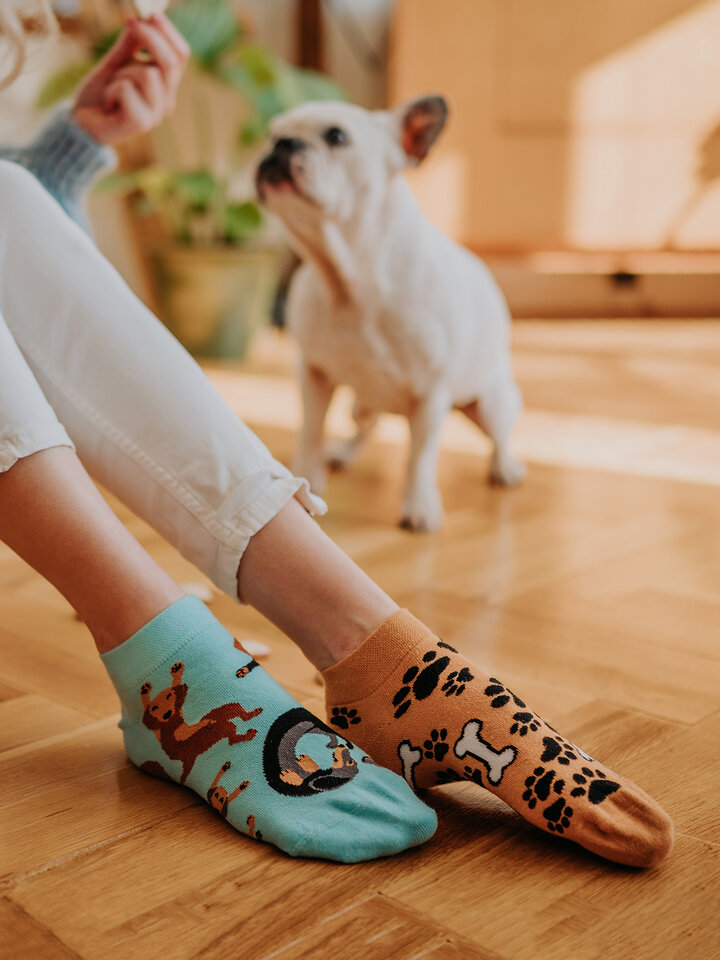Lifestyle photo Ankle Socks Dachshund