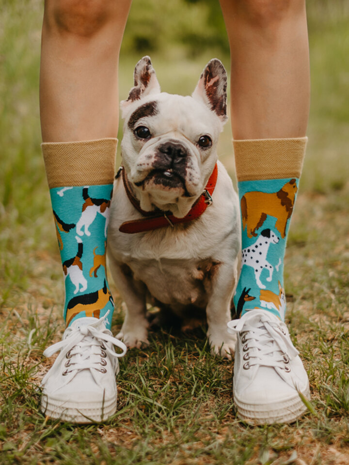 Lifestyle photo Regular Socks Dog Friends