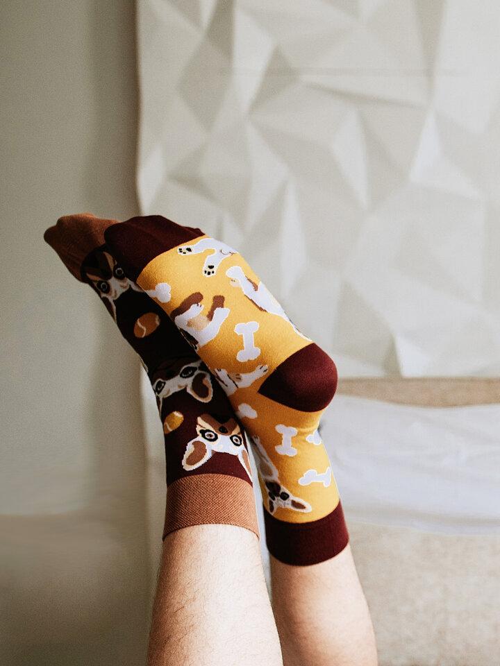 Lifestyle-Foto Lustige Socken Französische Bulldogge