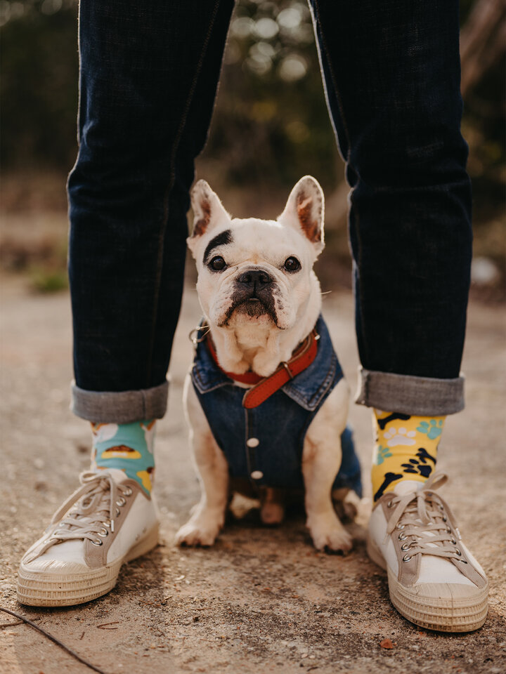Lifestyle photo Regular Socks Happy Dog
