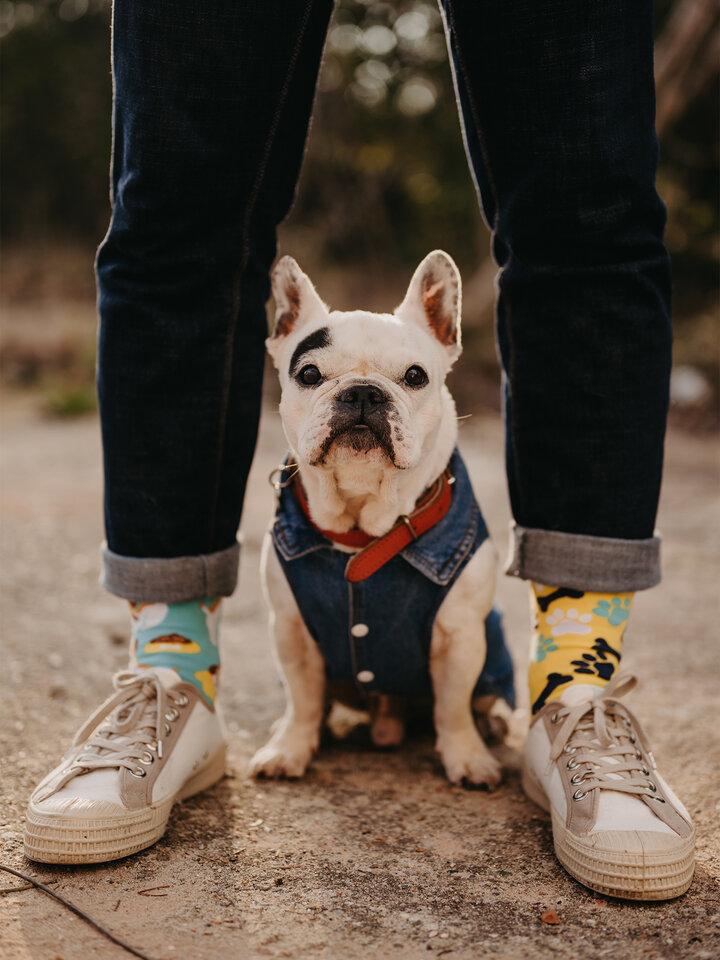 Lifestyle foto Șosete Vesele Câine Fericit