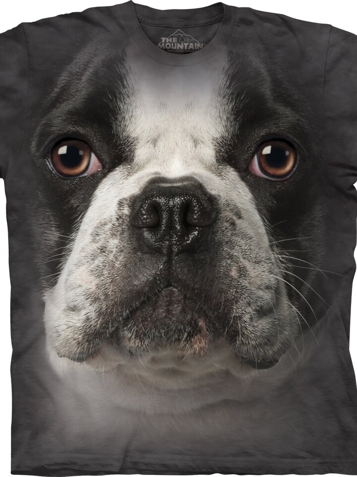 Lichidare de stoc French Bulldog Adult