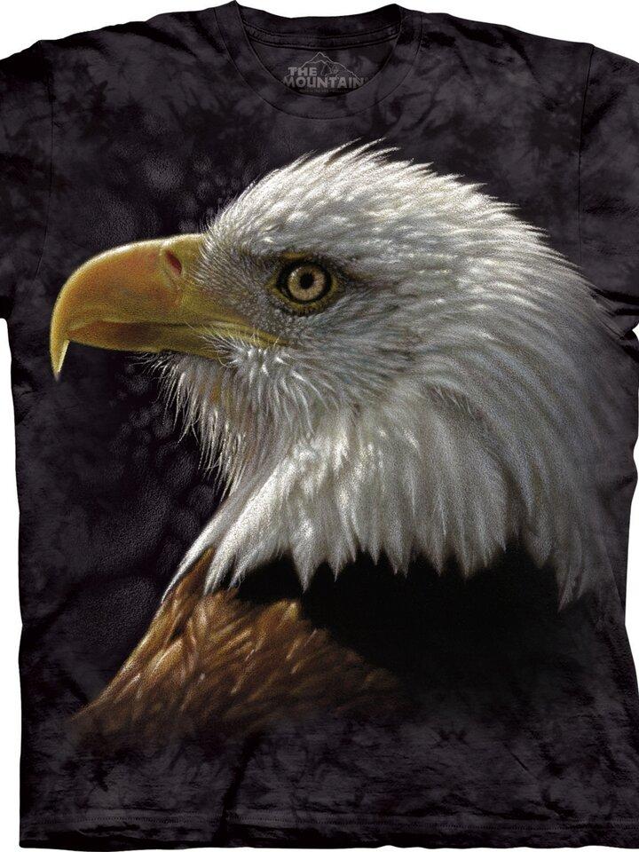 Lifestyle foto Bald Eagle Portrait