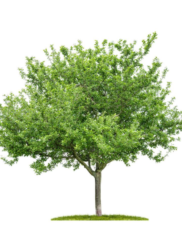 Lifestyle-Foto Pflanzen Sie 1 Baum ein