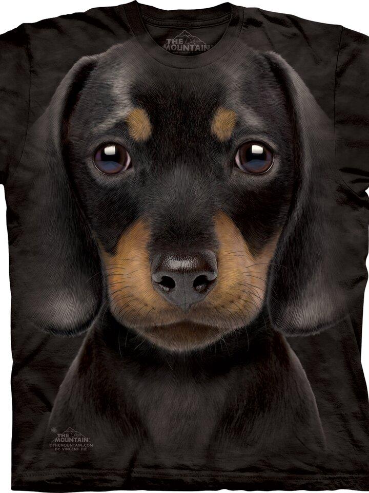 Výpredaj Dachshund Puppy Child