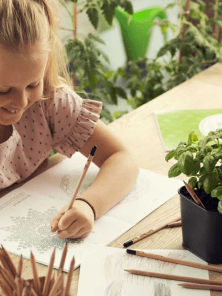Zdjęcie lifestyle Plant Your Pencil – Forget Me Not