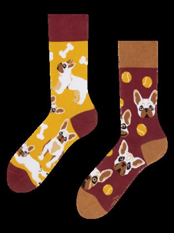 Lifestyle foto Vrolijke sokken Franse bulldog
