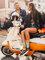 Reducerea Șosete vesele Spritz