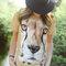 Bereiten Sie sich Freude mit diesem Dedoles-Stück T-Shirt Gesicht Gepard