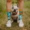 Lifestyle foto Vrolijke sokken Hondenvrienden