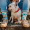 Original gift Regular Socks Dogs & Stripes