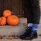 Výpredaj Vrolijke sokken Transsylvanië