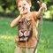 Potešte sa týmto kúskom Dedoles Tričko Lev bojovník - detské
